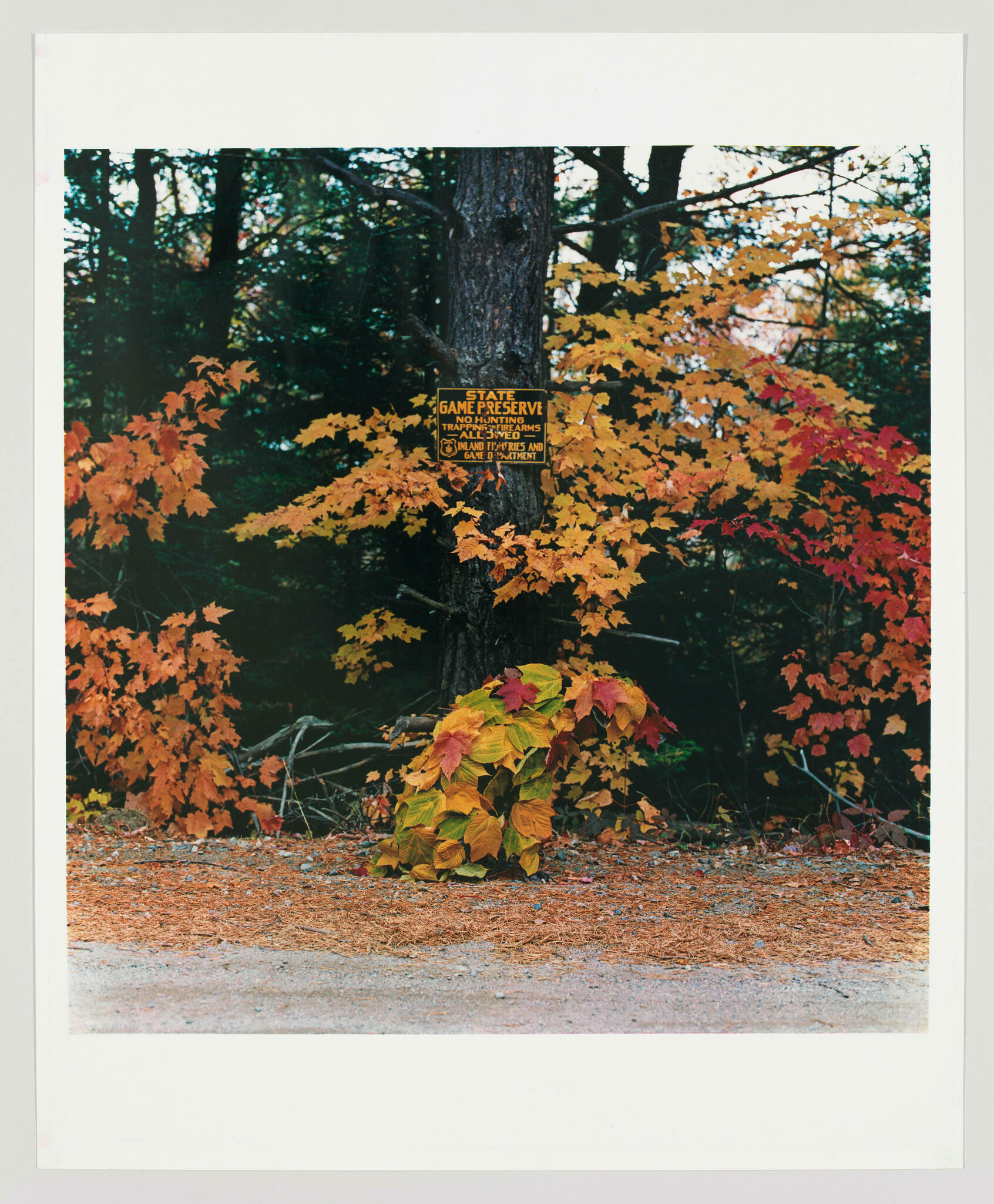 A peculiar mound of red, orange, yellow, and green leaves sits at the side of the road beside woods full of leaves of the same colors.