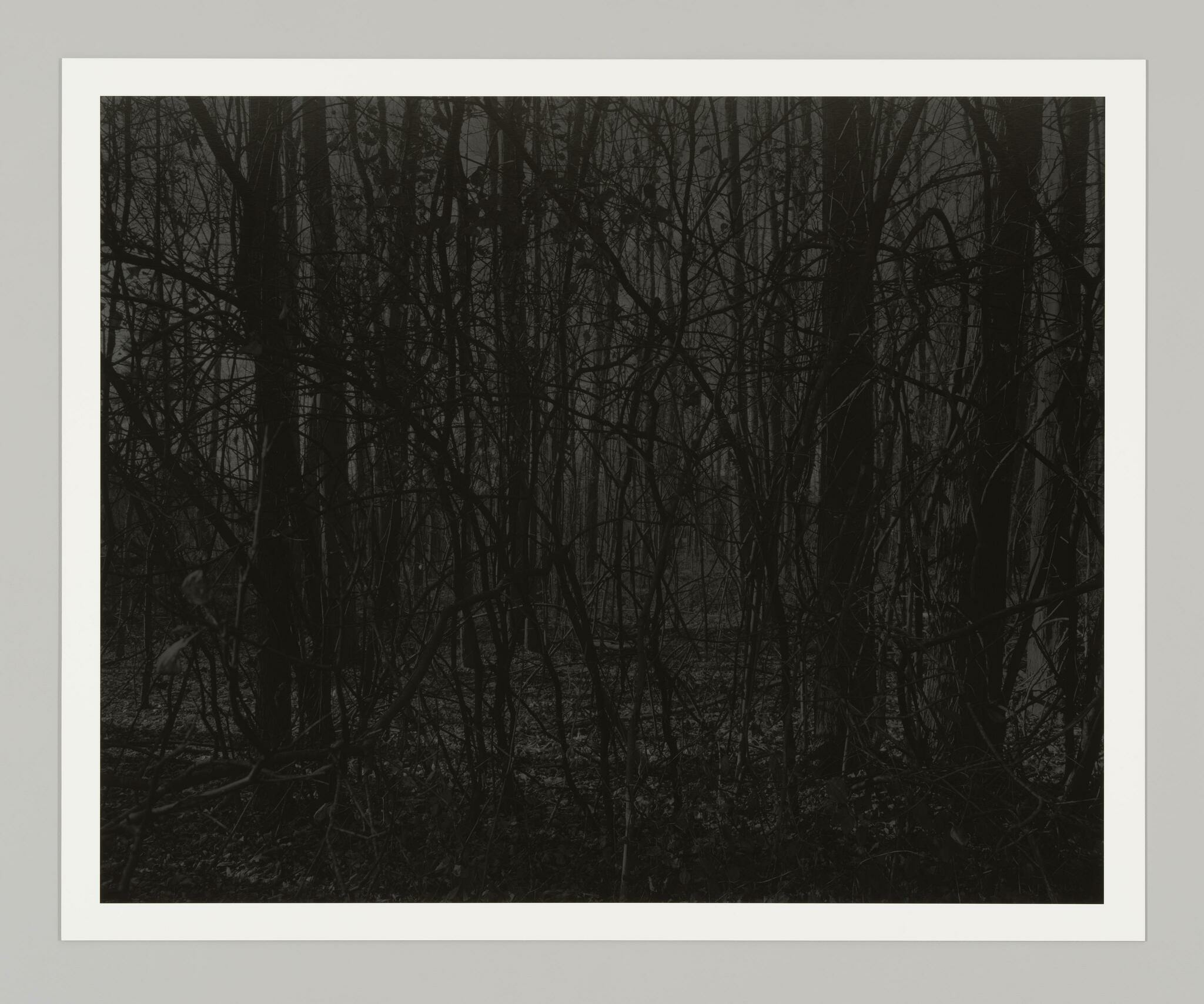 A tangle of black, bare trees crosshatch and animate the surface of a gray, nocturne forest scene.