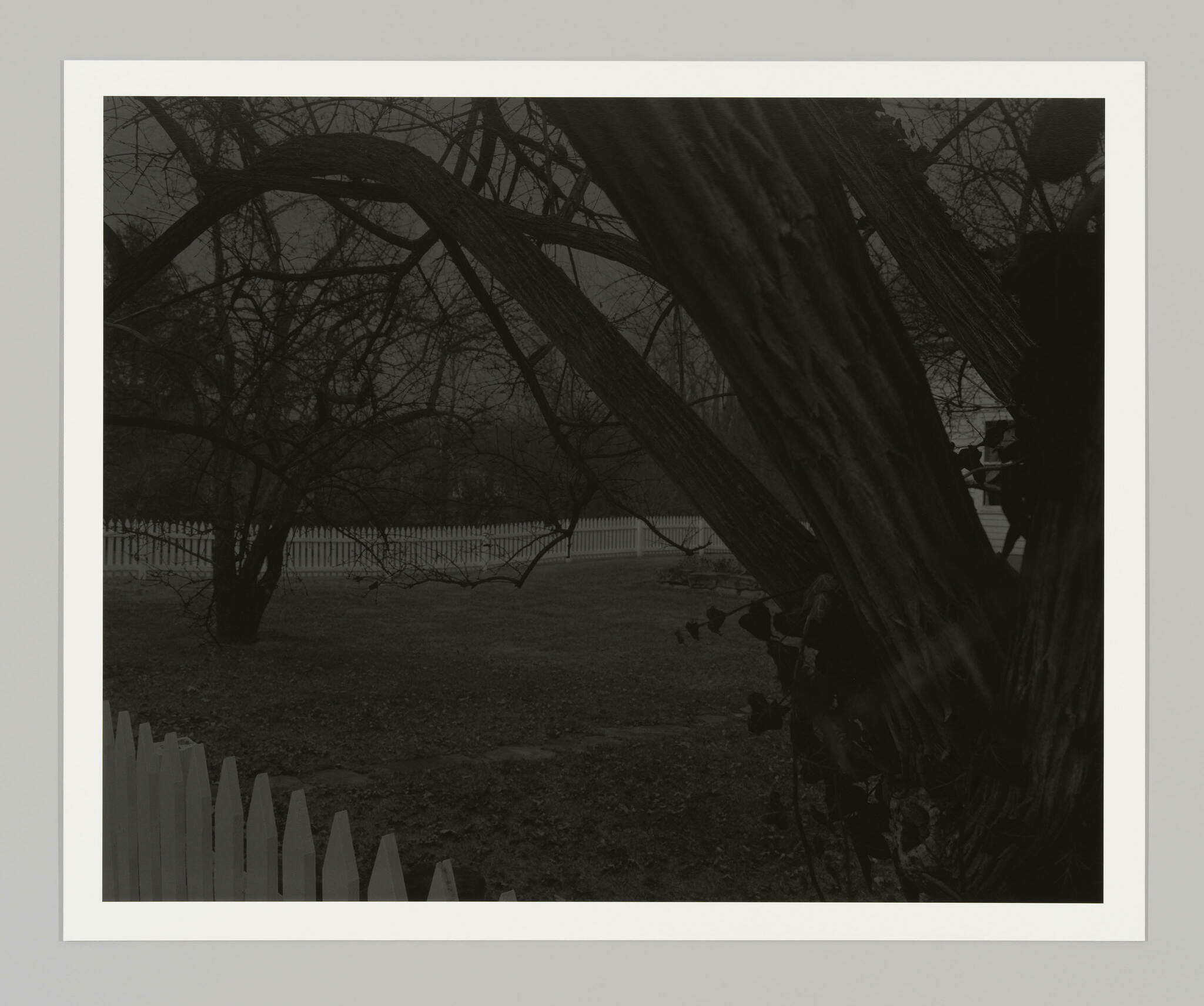 A greyscale image shows two bare trees enclosed by a white picket fence