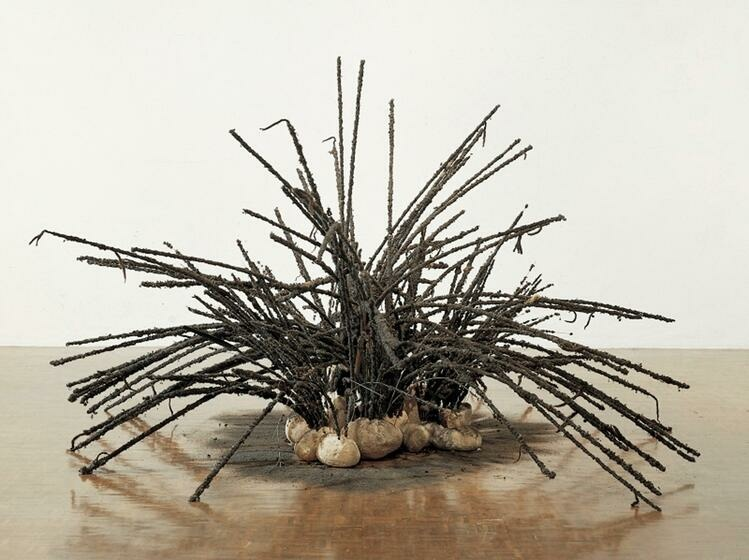 A cluster of long, bending, caked black rods emerges from a nest of rocks. The rocks sit on a patch of black, ash-like material.