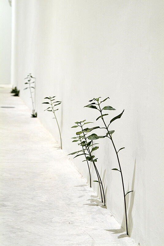 Green plants grow out of the floor in a white gallery.