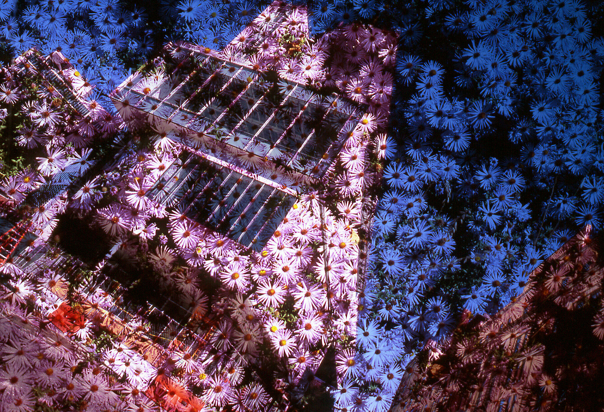 An image by Yuji Agematsu. The Whitney Museum is tinted pink and overlaid with flowers.