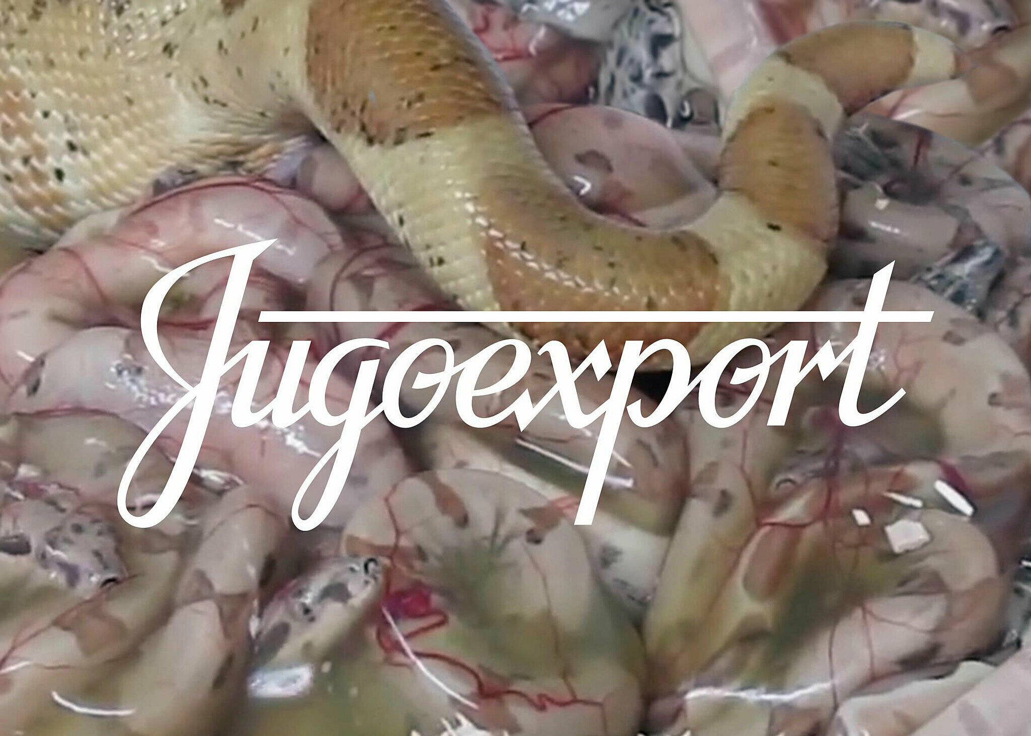 "Word ""Jugoexport"" superimposed over image of snakes"