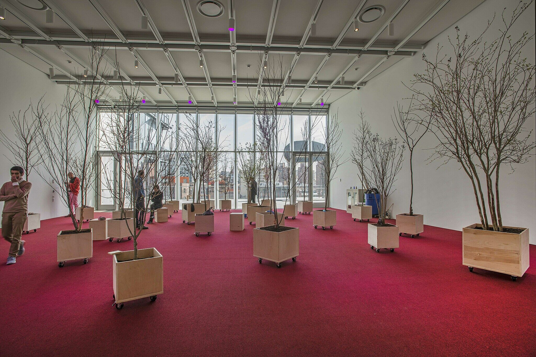 Red-carpeted room with many potted trees