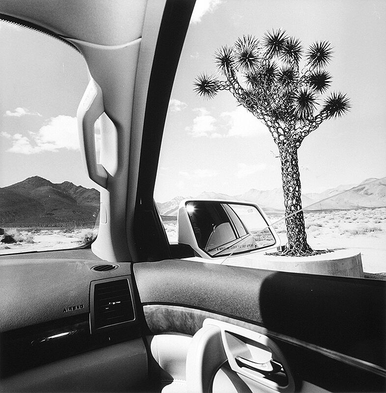 Joshua tree in a photo taken from car.
