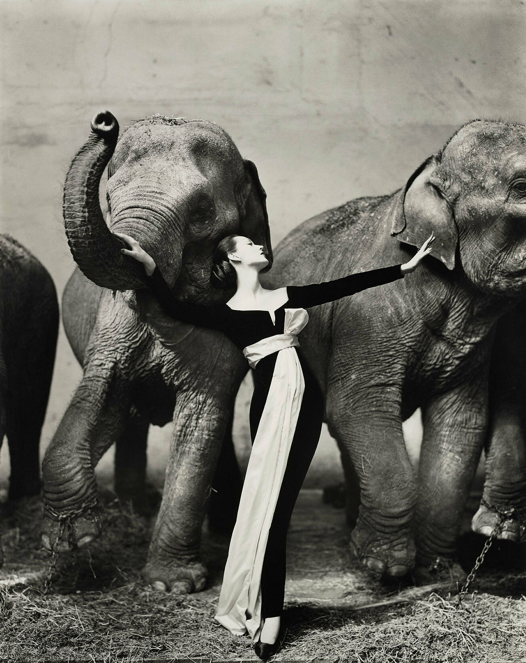 Black and white photo of a woman standing with two elephants.