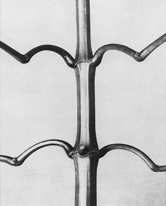 Close-up black and white photograph of flower stem.