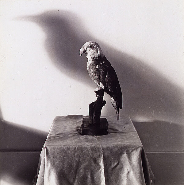 Black and white photograph of a bird with a shadow.