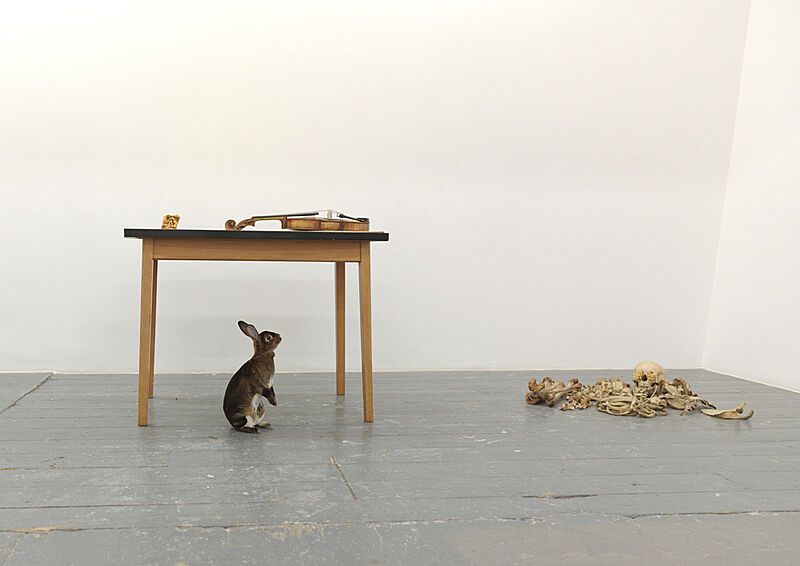 A rabbit, in front of a table with a violin on it, looking a pile of bones.