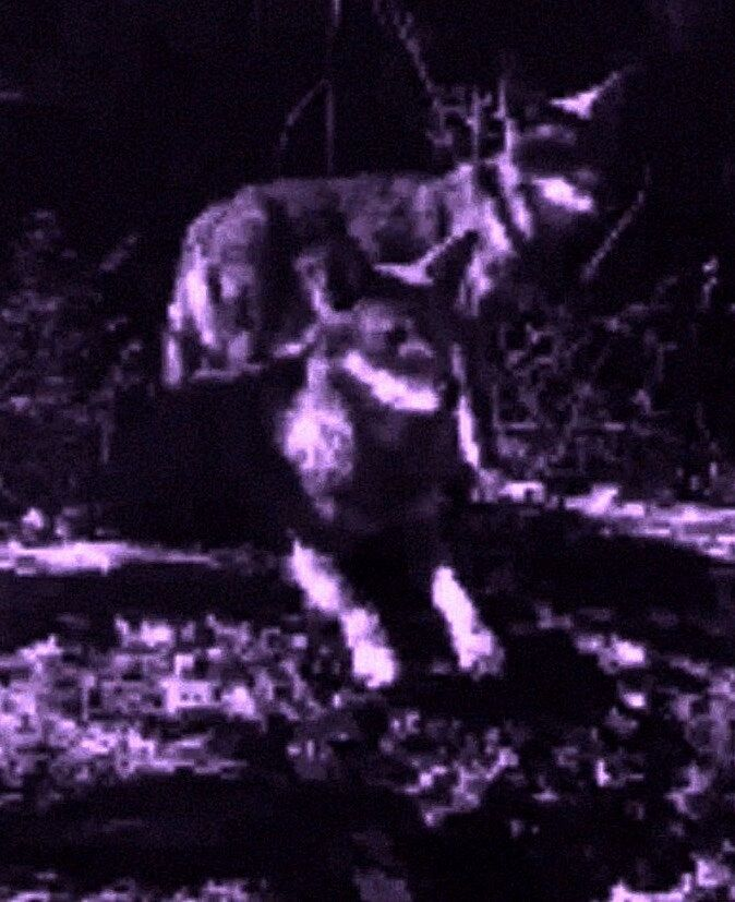 A purple-tinted, pixellated image of two wolves