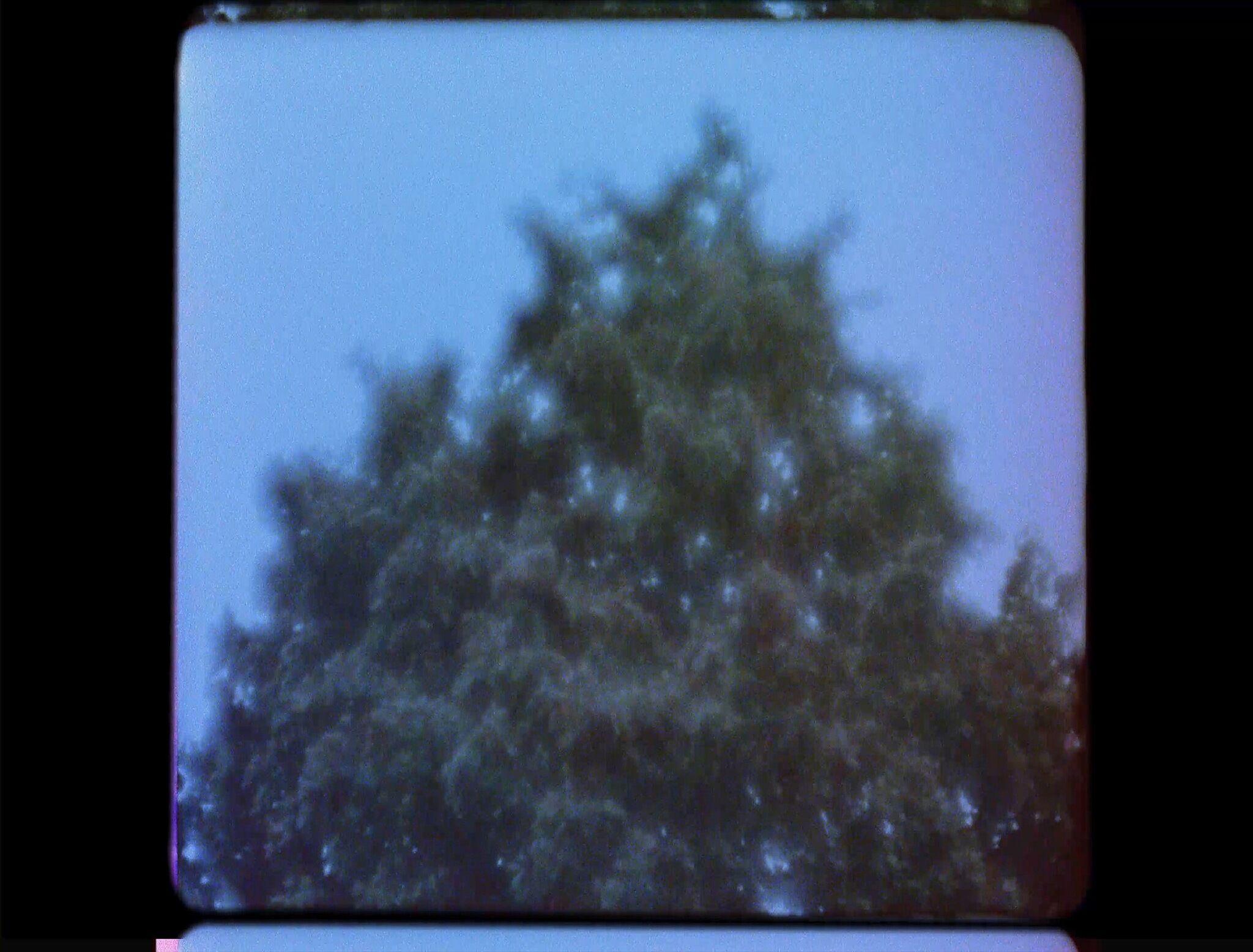 A film still of a tree.