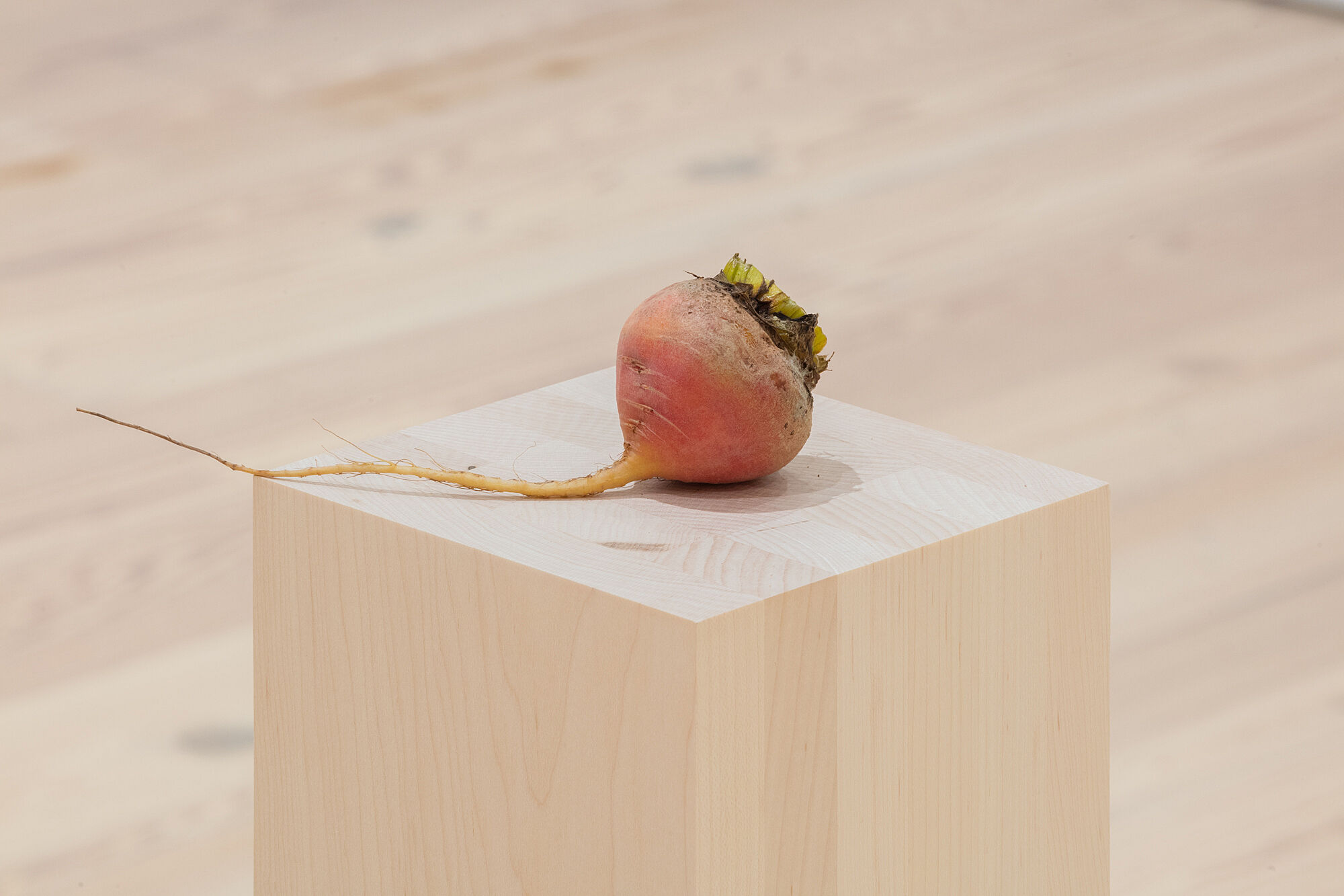 A photo of a golden beet on a plinth.
