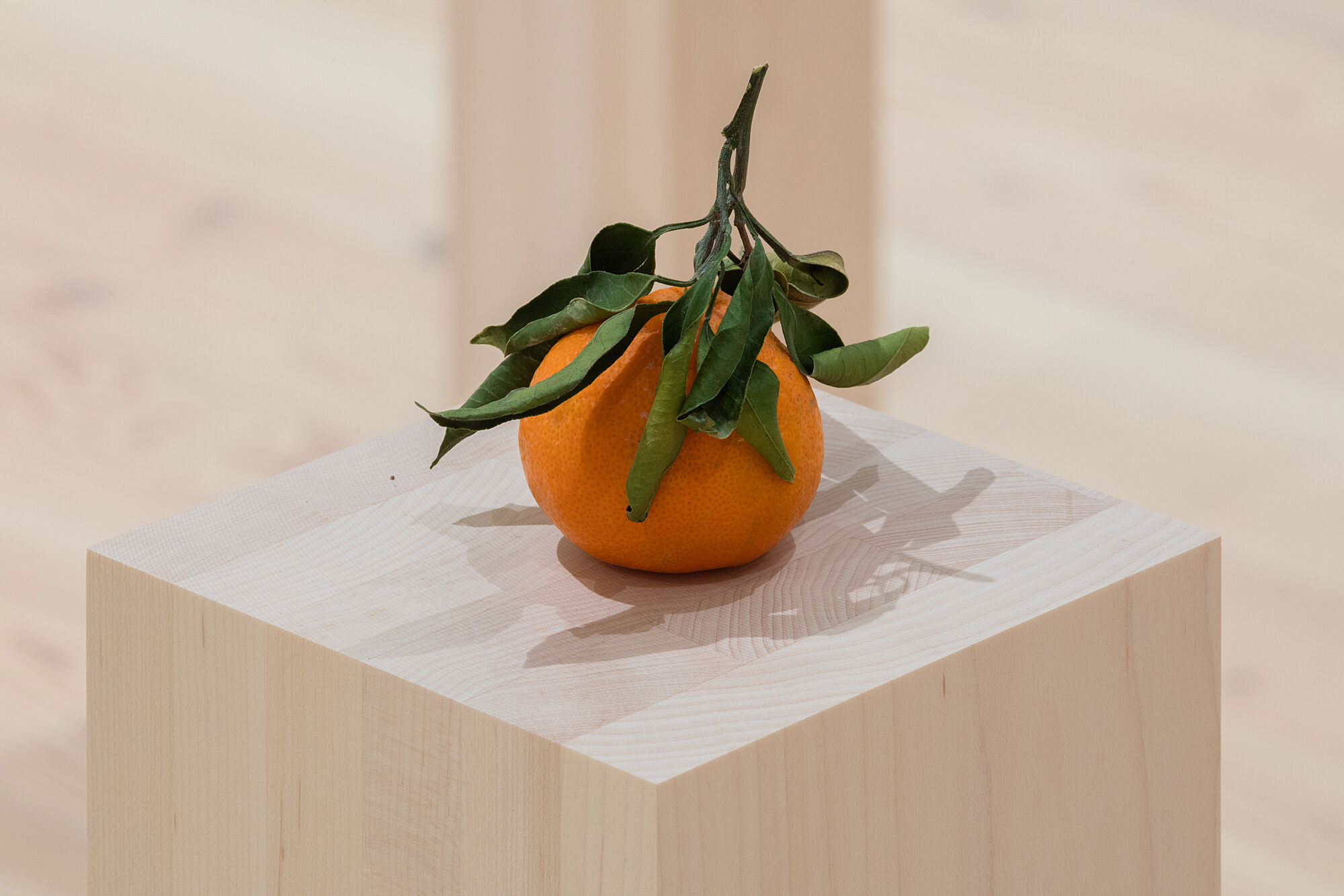 A photo of a clementine on a plinth.