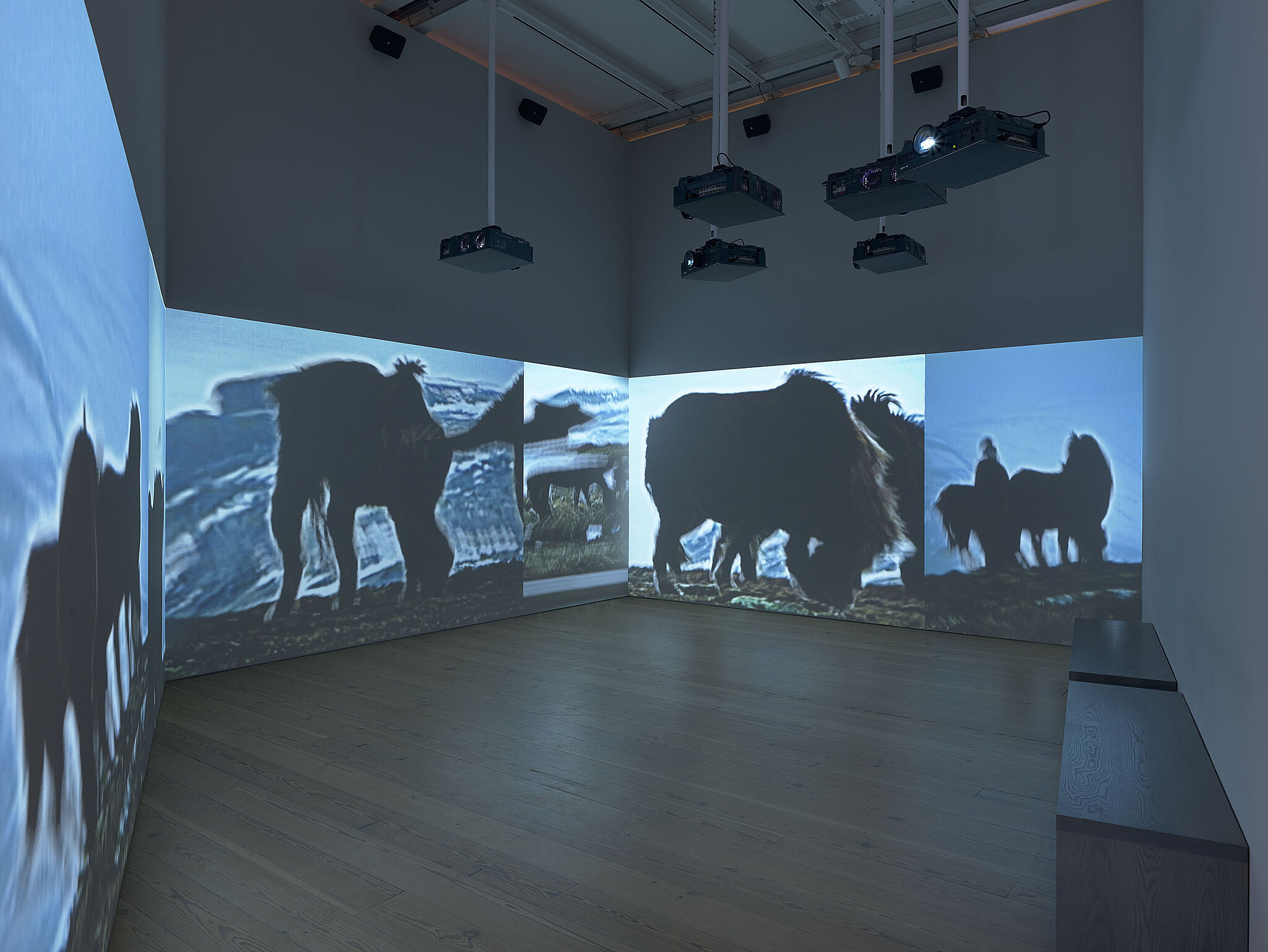 A photo of the Whitney galleries with various movie projections on the walls.
