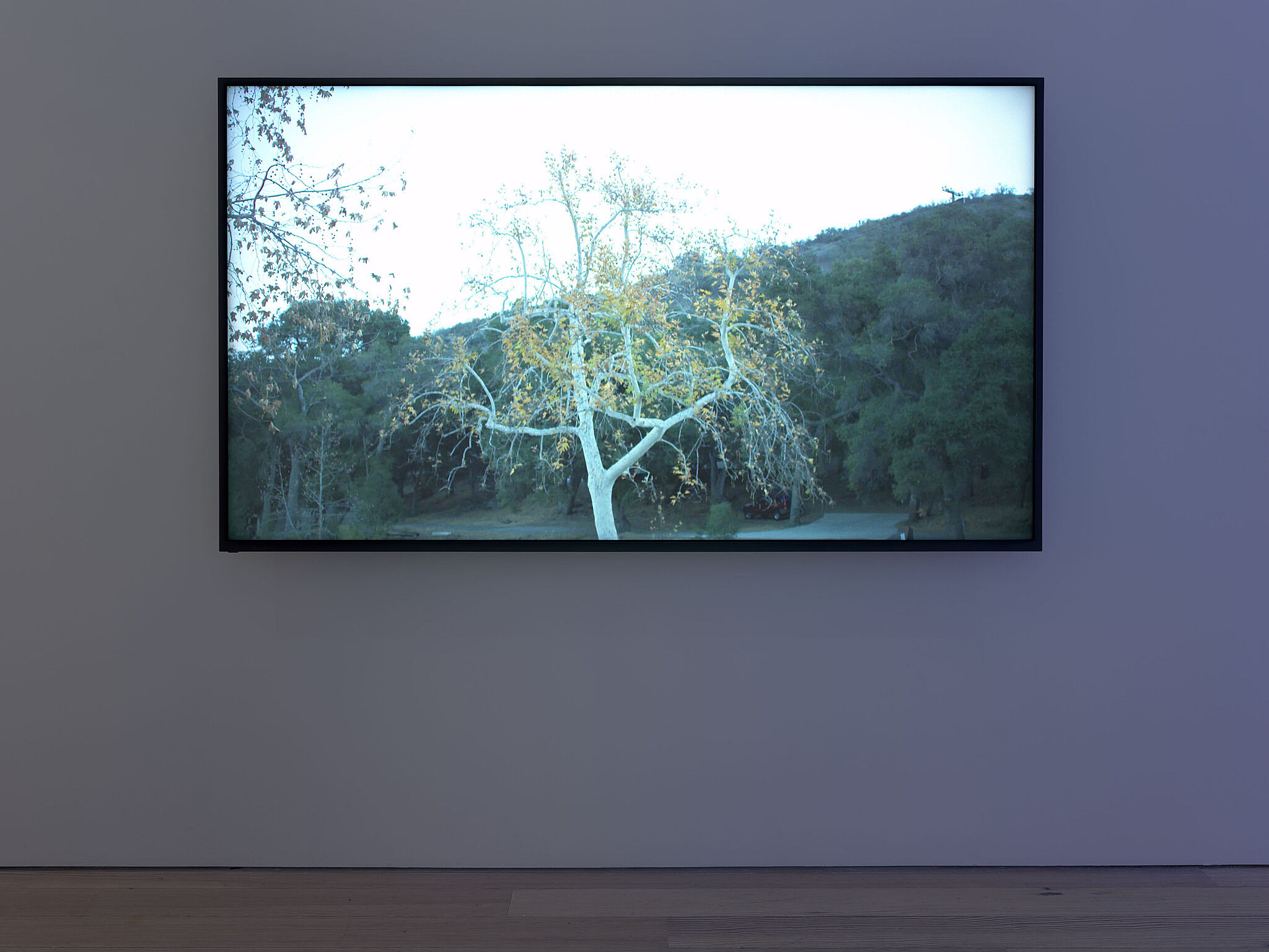 A video monitor with an image of a tree.