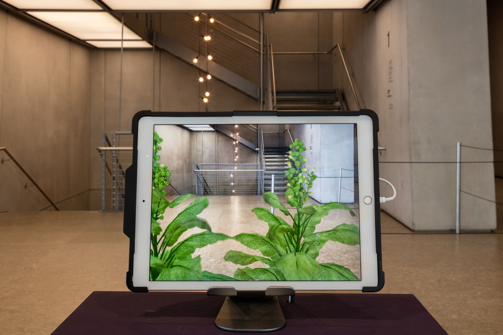 A tablet with an augmented reality app displaying a view of the Whitney's lobby with tobacco plants.
