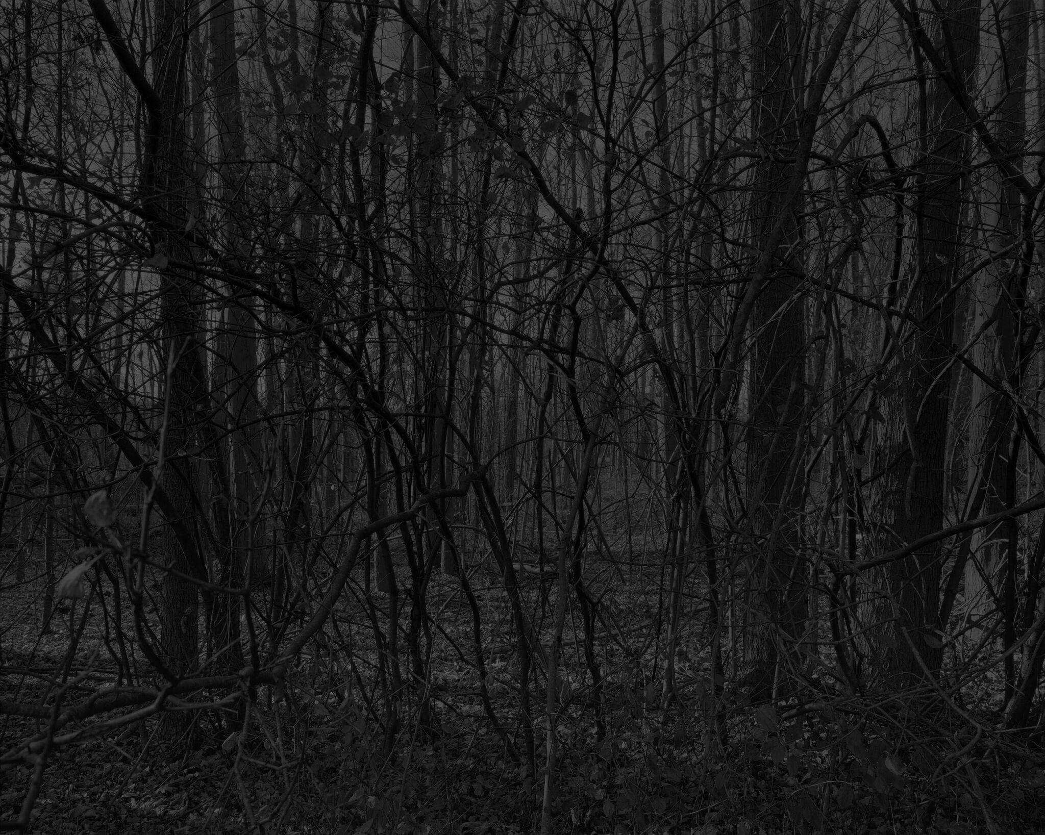 A greyscale close-up of a dense forest area.