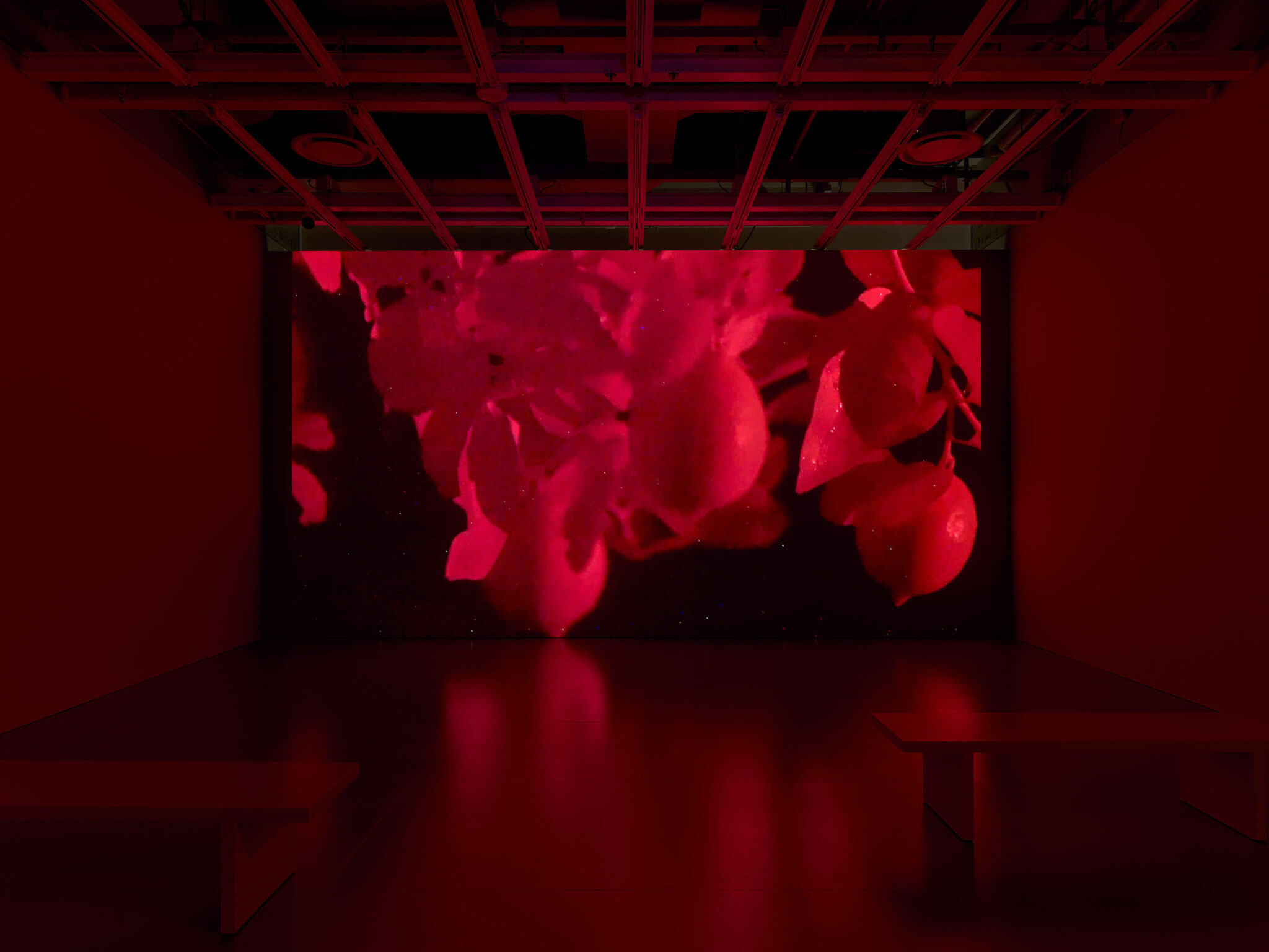 A floor-to-ceiling video screen featuring a still from Madeline Hollander's Flatwing video installation.
