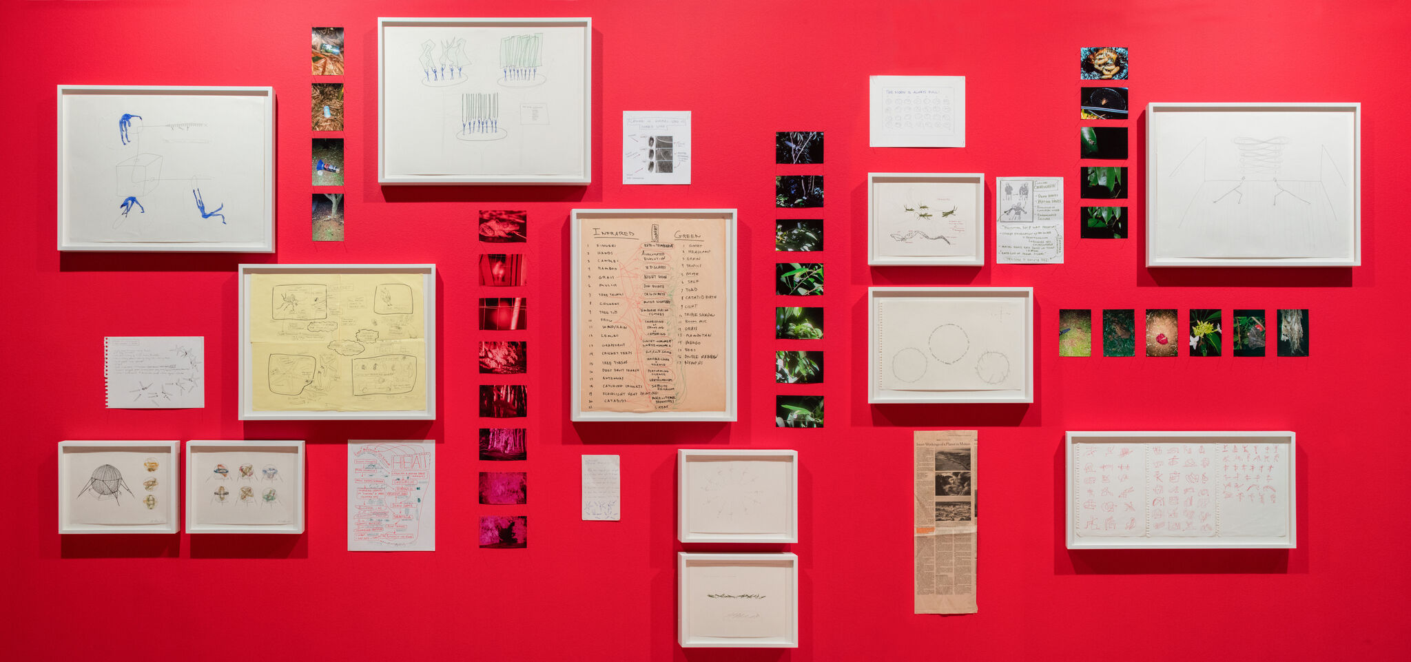 A red wall with framed pieces from the Madeline Hollander exhibition.
